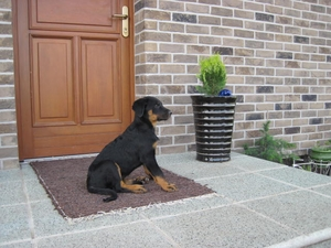 Abilene is waiting bz the door to her house. 11 week old