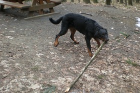 Alf took wooden branch to play with